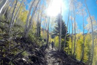 Snowbird Big Mountain Trail Aspens